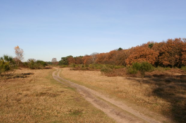 Moors between Hilversum and Laren